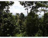 Land - land for sale @ moragolla, kandy 120p  in Ampitiya